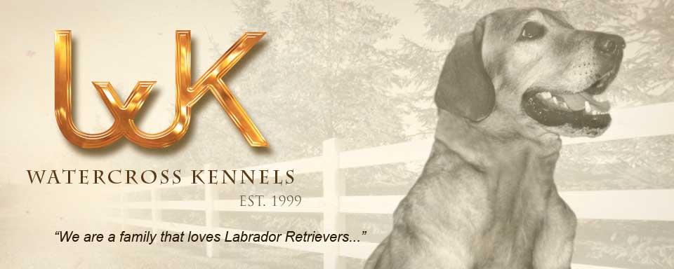 Watercross Kennels - Labrador Retrievers Kennel